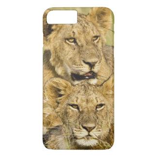 Group of lion cubs, Panthera leo, Masai Mara, iPhone 7 Plus Case