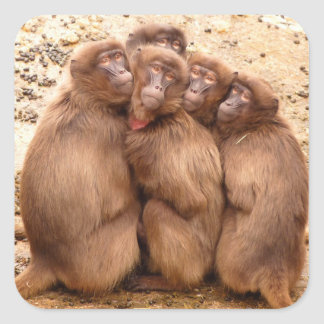 Group of Monkeys Sticker