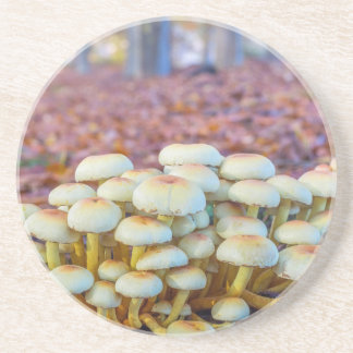 Group of mushrooms in fall beech forest coaster