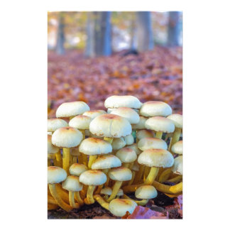 Group of mushrooms in fall beech forest stationery