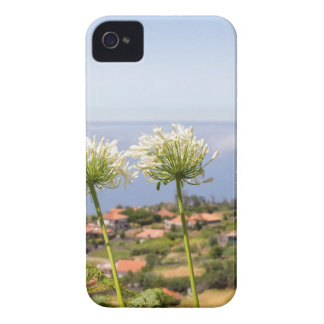 Group of white agapanthus near village and sea Case-Mate iPhone 4 cases