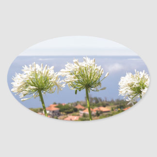 Group of white agapanthus near village and sea oval sticker
