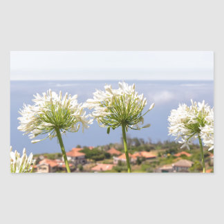 Group of white agapanthus near village and sea rectangular sticker