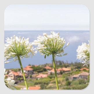 Group of white agapanthus near village and sea square sticker