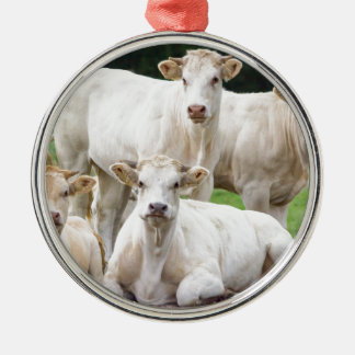 Group of white beige cows posing in meadow metal ornament