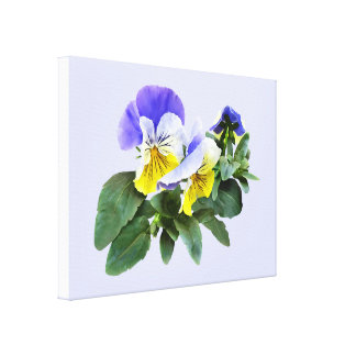Group Of Yellow And Purple Pansies Canvas Print