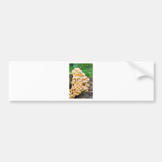 Group orange yellow mushrooms in fall forest bumper sticker