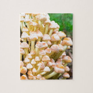 Group orange yellow mushrooms in fall forest jigsaw puzzle