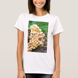 Group orange yellow mushrooms in fall forest T-Shirt