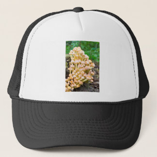 Group orange yellow mushrooms in fall forest trucker hat