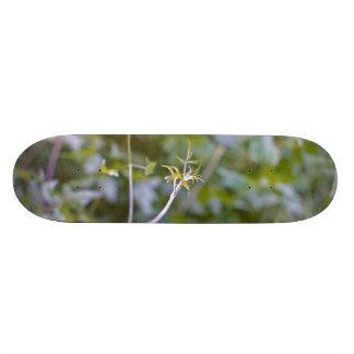 Growth and Transformation 21.6 Cm Skateboard Deck