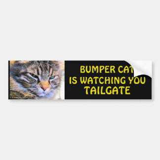 Grumpy Angel Bumper Cat is watching TAILGATE 40 Bumper Sticker
