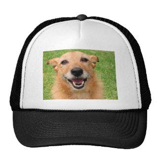Grumpy Cat demise/ Happy Dog Products Trucker Hat
