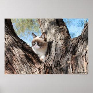 Grumpy Cat™ In a Tree Poster