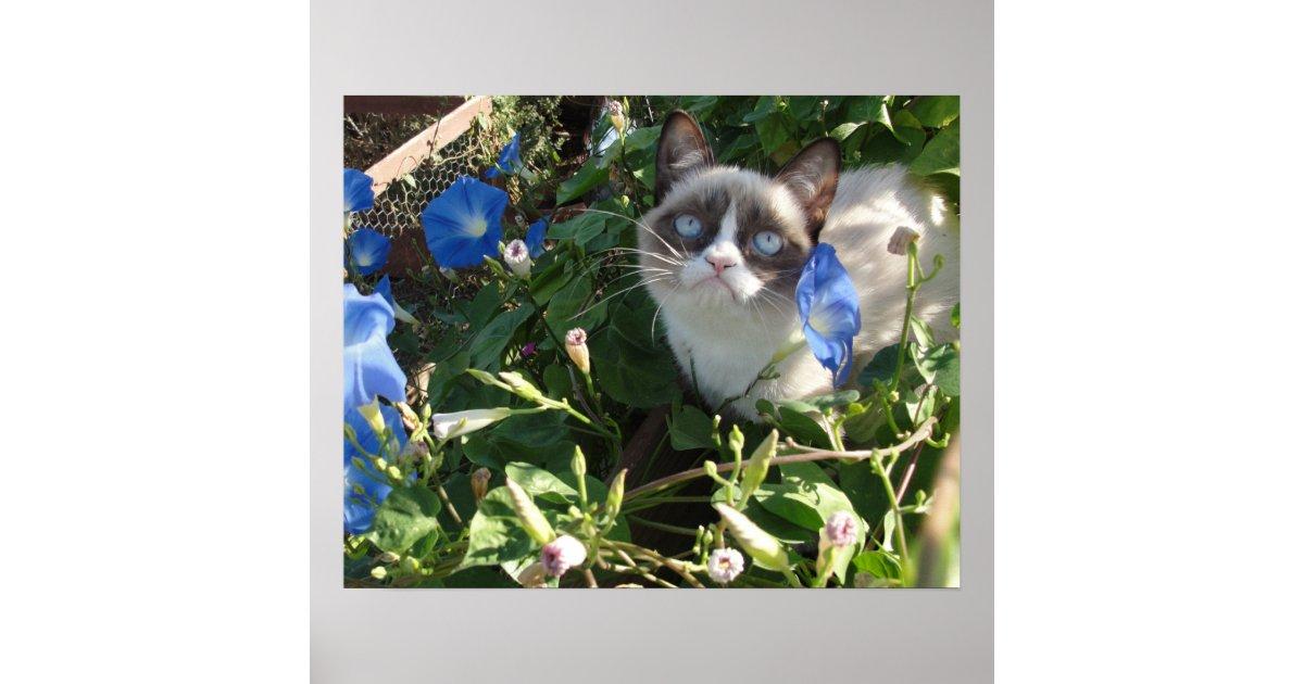 Grumpy Cat in the Morning Glories 20x16