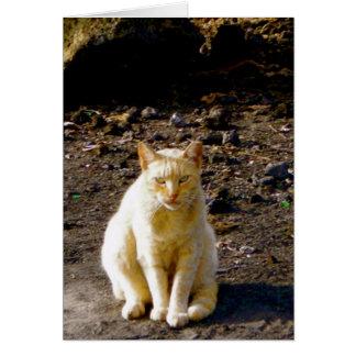 Grumpy Cat Stink Eye Card