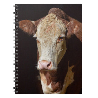 Grumpy Cow Notebooks