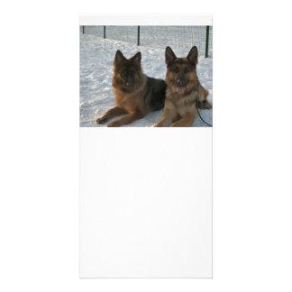 GS 2 german shepherds Personalised Photo Card