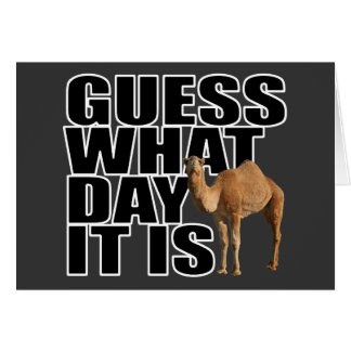 Guess What Day It Is Hump Day Camel Greeting Card