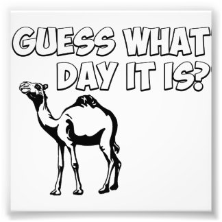 Guess What Day it Is? Hump Day Camel Photo