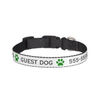 Guest Dog Pet Sitter Collar