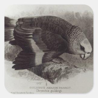 Guilding's Amazon Parrot Square Stickers