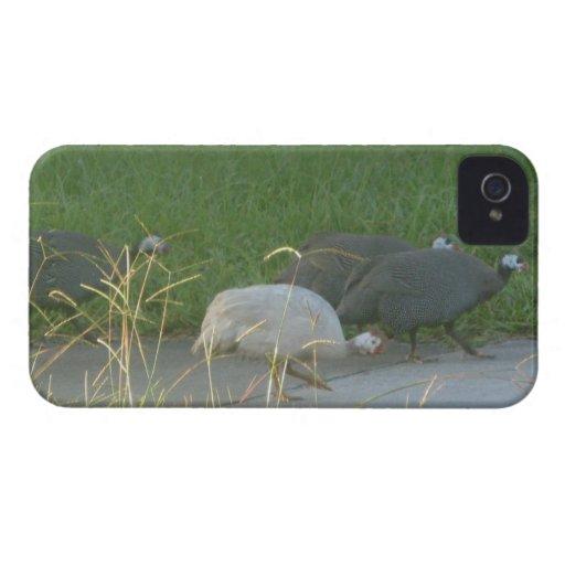 Guinea Fowl Blackberry Bold Case