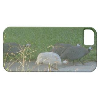 Guinea Fowl iphone 5 case