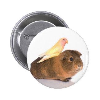 guinea pig and yellow bird 6 cm round badge