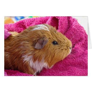 Guinea Pig bath Card