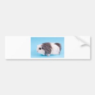 guinea pig bumper sticker