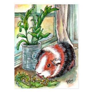 Guinea Pig by the Window Postcard