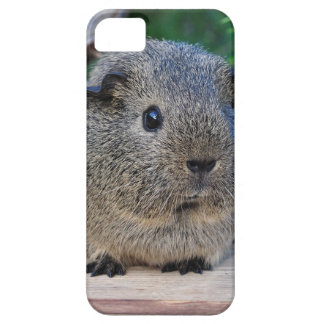 Guinea Pig Case For The iPhone 5