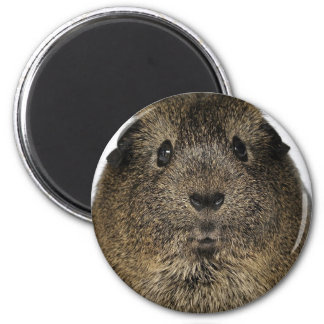 Guinea Pig Close Up 6 Cm Round Magnet
