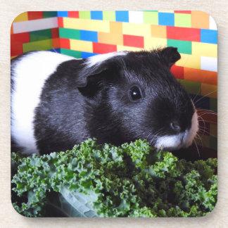Guinea Pig Coaster