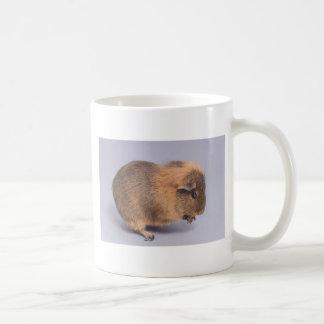 guinea pig, coffee mug