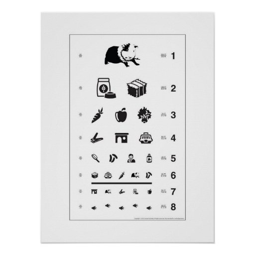 Guinea Pig Eye Chart Posters