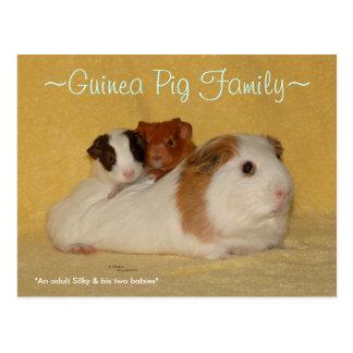 Guinea Pig Family Postcard