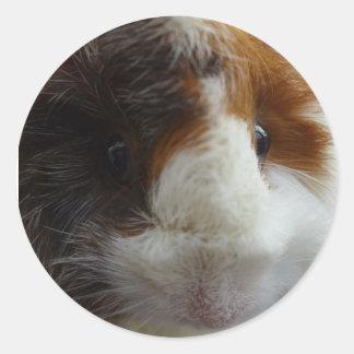 Guinea Pig friend of Pixle Classic Round Sticker