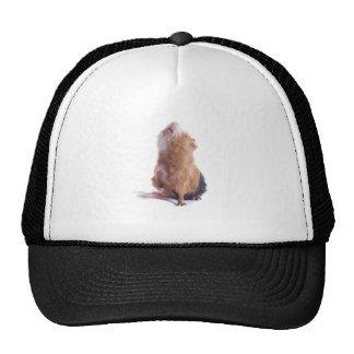 guinea pig, hat