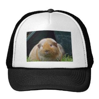 Guinea pig hats