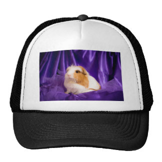 guinea pig trucker hat