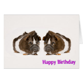 Guinea pig image for Birthday greeting card