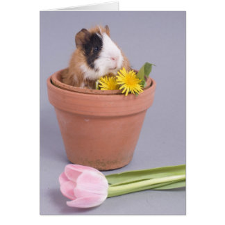 guinea pig in a flowerpot card