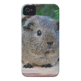 Guinea Pig iPhone 4 Case