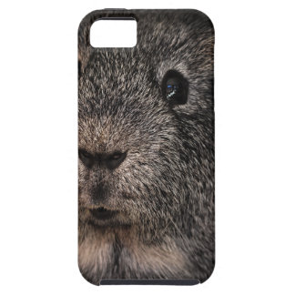 Guinea Pig Music Pet Case For The iPhone 5
