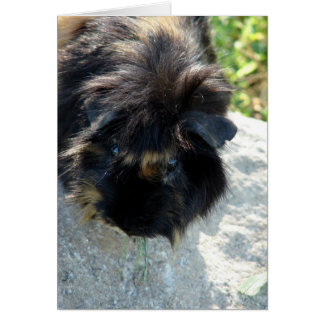 Guinea Pig on Rock Card