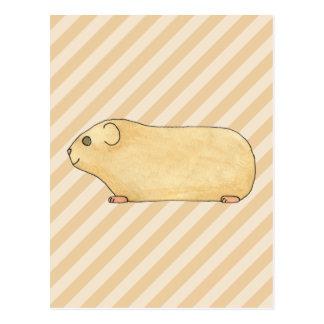 Guinea Pig. Postcard
