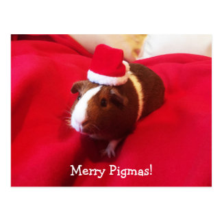 Guinea Pig Santa Claus Christmas Holiday Postcard