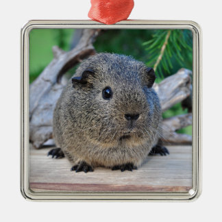 Guinea Pig Silver-Colored Square Decoration
